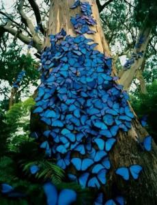 farfalle azzurre-le tazzine di yoko