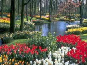 giardino fiorito-le tazzine di yoko
