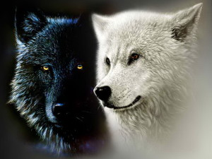 Black-and-White-Wolf-le tazzine di yoko