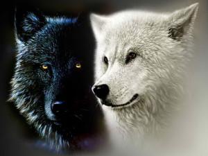 Black-and-White-Wolf-le tazzine di yoko