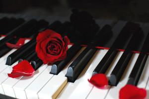 Piano__Rose_02_by_kazuaka