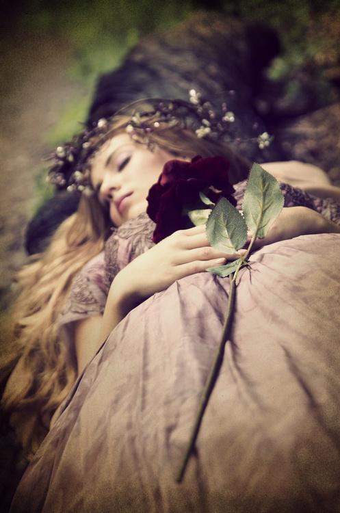 rosa bella addormentata lei